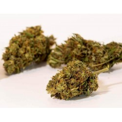 PACK CBD NATURAL GOLDEN BUDS